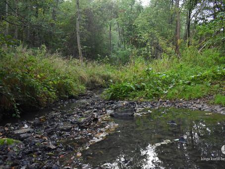 po tamtej stronie potoku