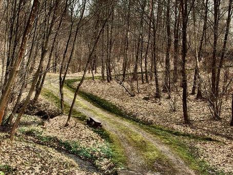 wiosna wita w Dolinie Potoku Rudno