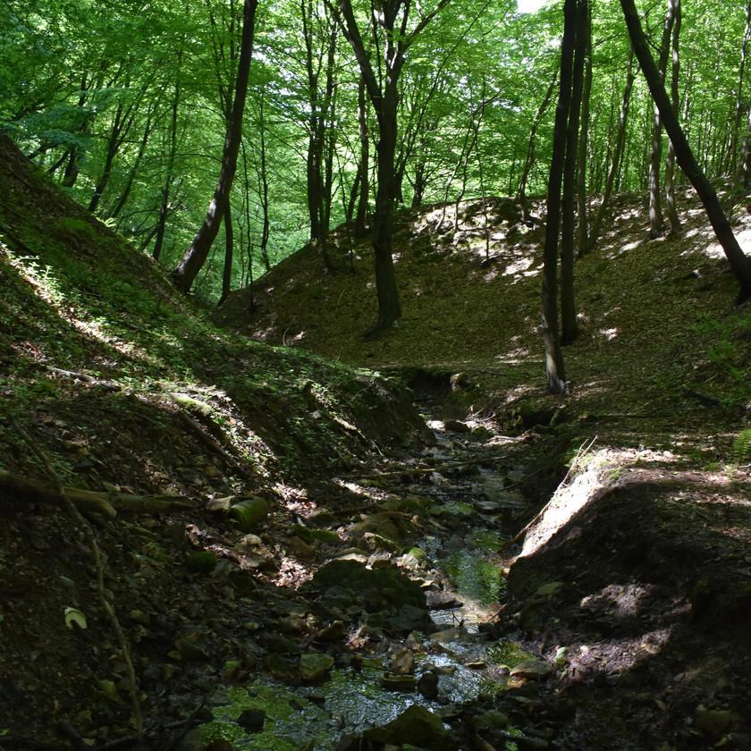 Drzewa i czyste strumienie