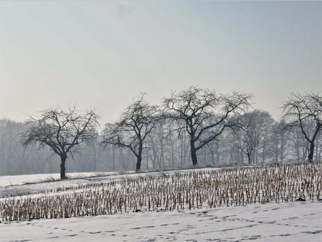 moje Wrzosy zimą