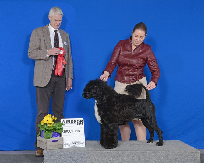 Canadian Kennel Club Group 2!!!