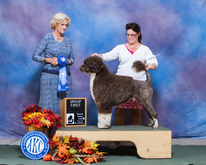 Chase,  GCH High Winds Stand By Me, Another Group 1 and Group 3!!!!!!