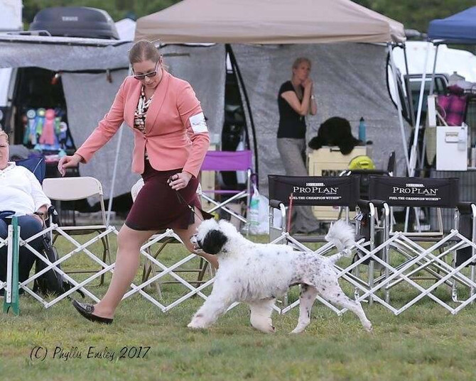 Gch. High Winds Black Eyed Susan!!!!   Rocks it.....She made it down to the finals at the Nationals.