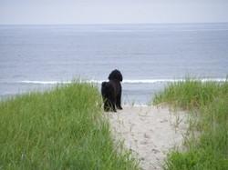 Zoey on the beach