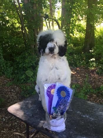 New Champion!!!!!  Susie's Turn