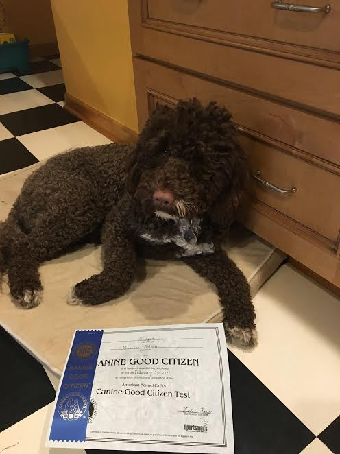 Gidget gets her Therapy Title!!!!  Congrats Gidget and Maureen!!!
