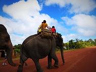 Elephants dans la Région de Mondulkiri, asie a la carte by asieland