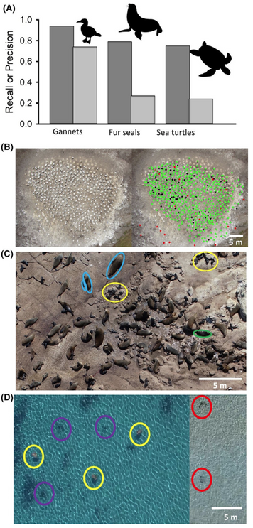 Machine learning to detect marine animals in UAV imagery