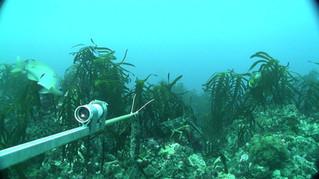 Mapping Victoria's Unique Sea Habitats