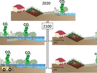 Which Management Action Produces the GREATEST Gains in Blue Carbon Sequestration?