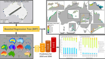 National Scale Predictions of Contemporary and Future Blue Carbon Storage