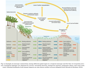 Seascape ecology: identifying research priorities for an emerging ocean sustainability science