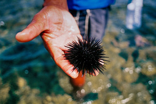 New Deakin study finds sea urchins major culprits in CO2 emissions
