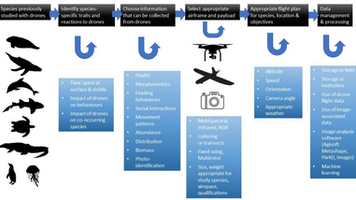 Operational Protocols for the Use of Drones in Marine Animal Research