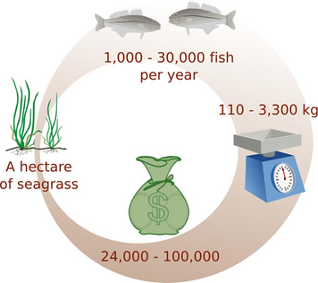 Seagrass Valuation from Fish Abundance, Biomass and Recreational Catch