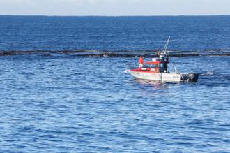 Invertebrate Fishery Interactions
