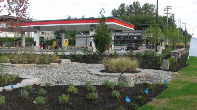 Petrol Canada Foliage