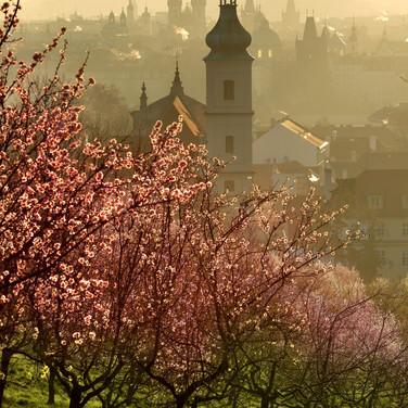 Spring on Petřín hill