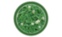 white clover, lawn, care, programs