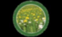 dandelion, lawn, care, programs