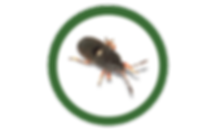 chinch bugs, lawn, care, programs