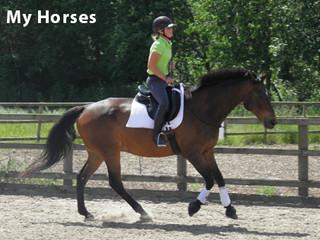My Horses_v1.jpg