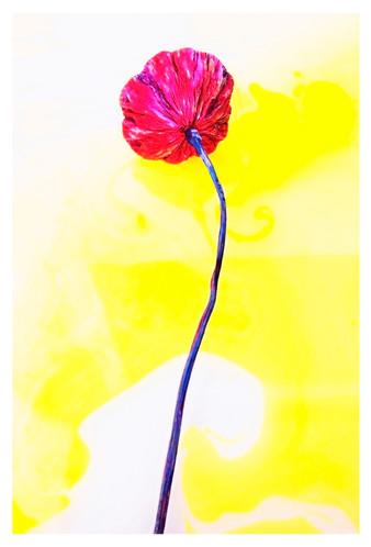 꿈의기호#191_30x45cm_archival pigment print_