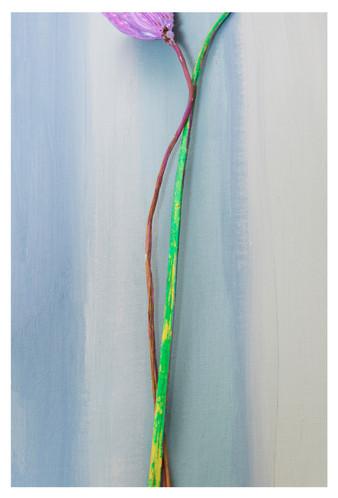 꿈의기호#204_40x60cm_archival pigment print_