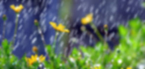 april showers.jpg