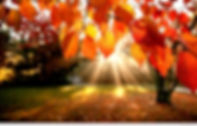 September tree.jpg