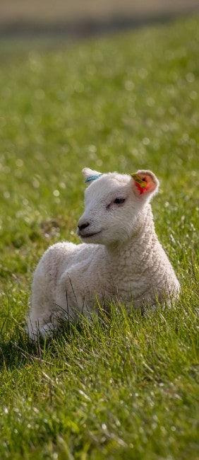 About Our Organic Farm - Drovers Hill Farm - Organic Lamb