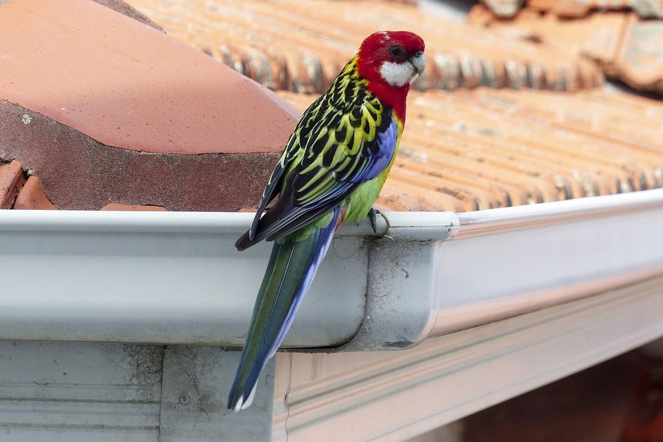 bird sitting on a rain gutter
