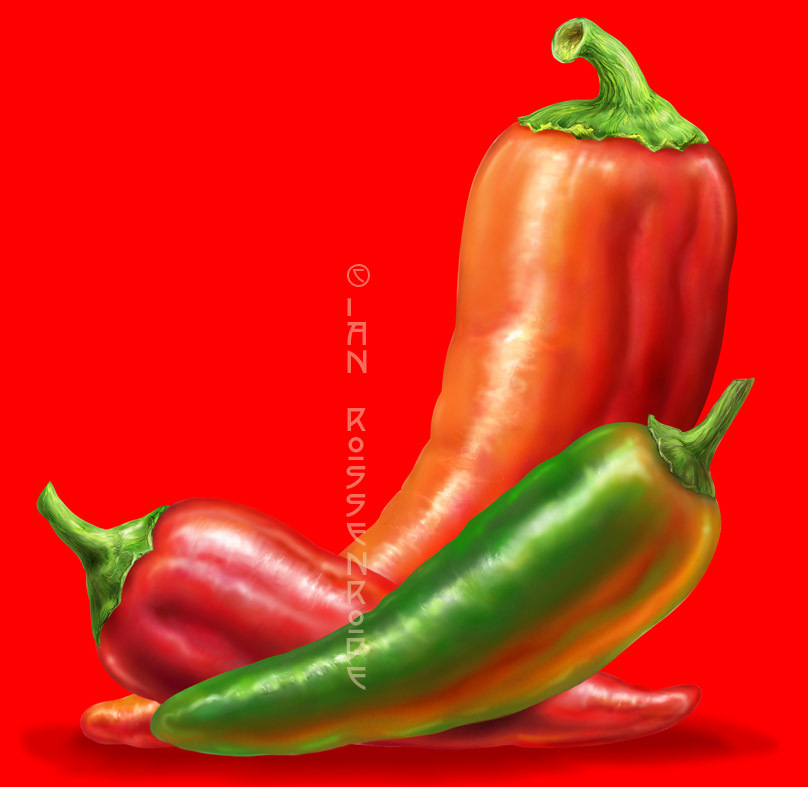 Chilies - digital illustration