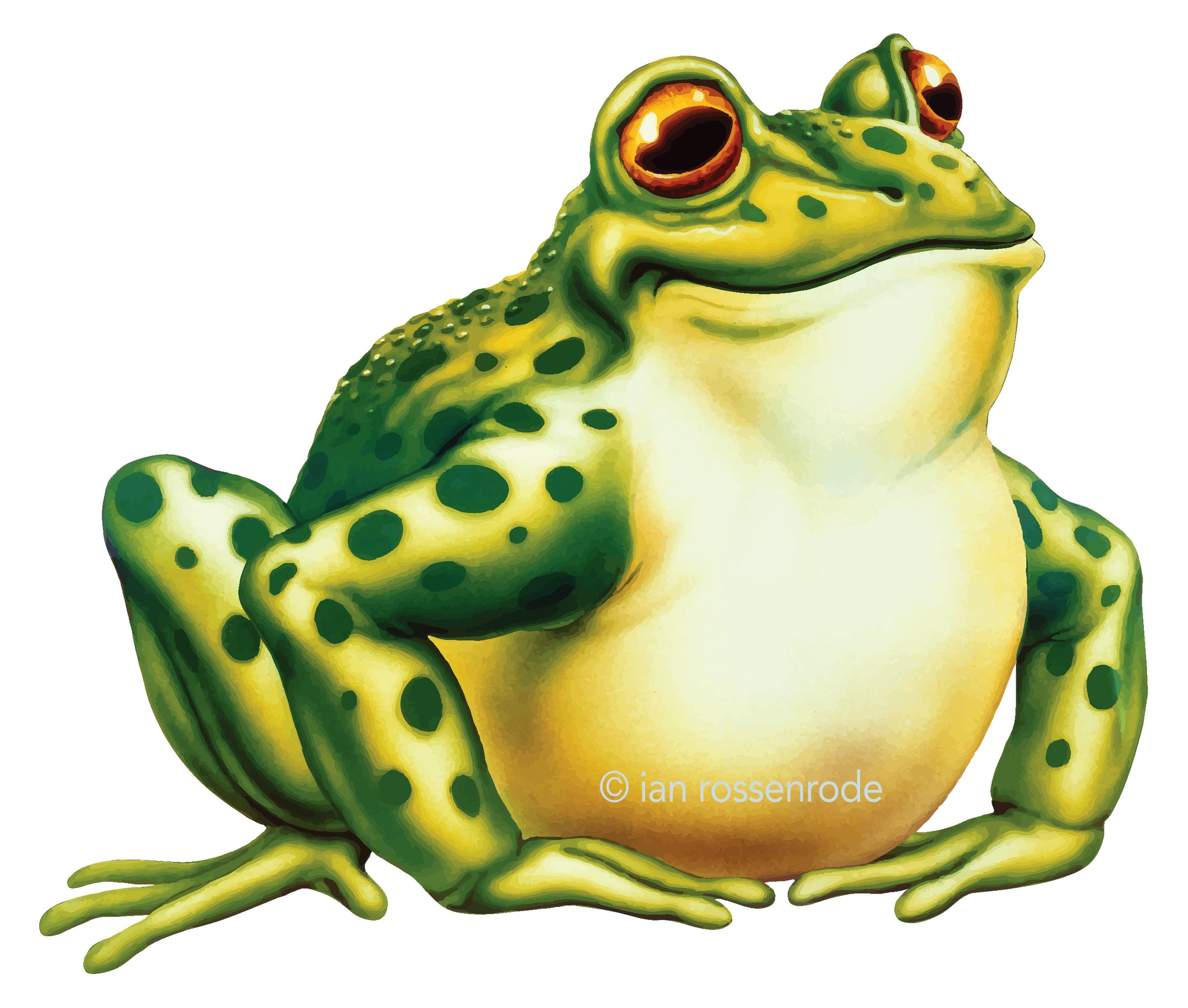 Frog toon vector