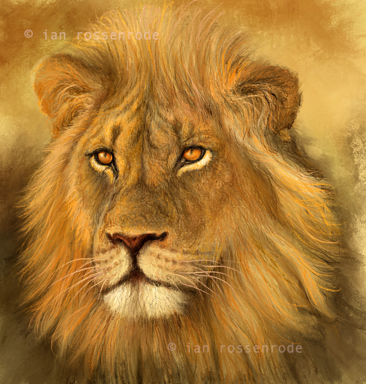 iPad Lion illustration