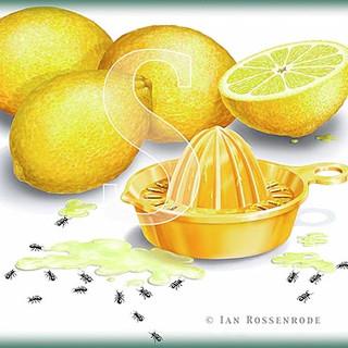 LEMONS - food illustration