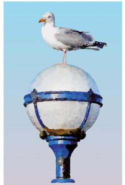 Gull - vector illustration