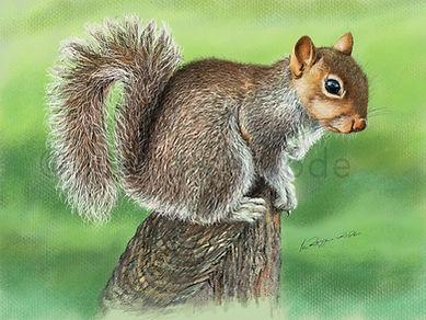 Squirrel 5 new watermarked sm.jpg