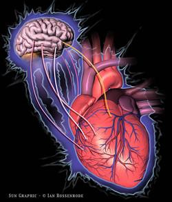 Heart to Brain