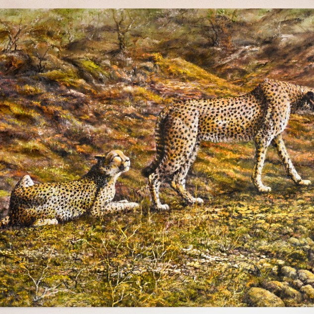 Cheetahs in dry river bed