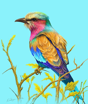 Lilac Breasted Roller preview.jpg