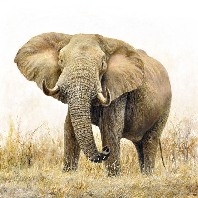 Lone Elephant oil on canvas