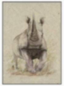 Rhino line and wash