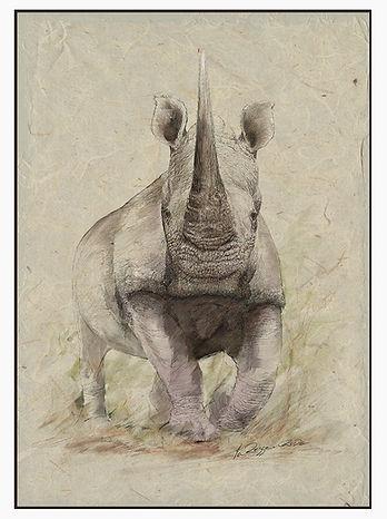 Rhino line and wash