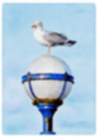 gull_on_lamp_signed.jpg