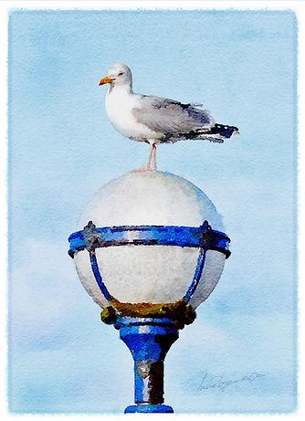 gull_on_lamp_signed.jpg