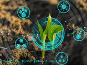 Блокчейн будут использовать в сельском хозяйстве