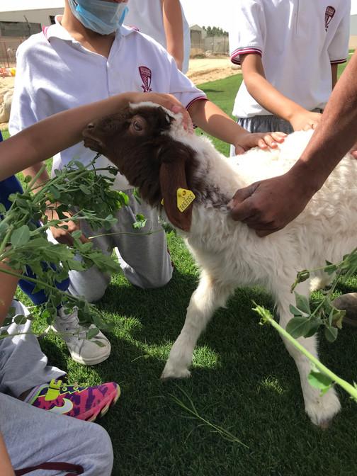 Farm trip - sheep.jpg