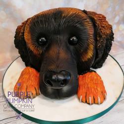 Leonberger dog cake