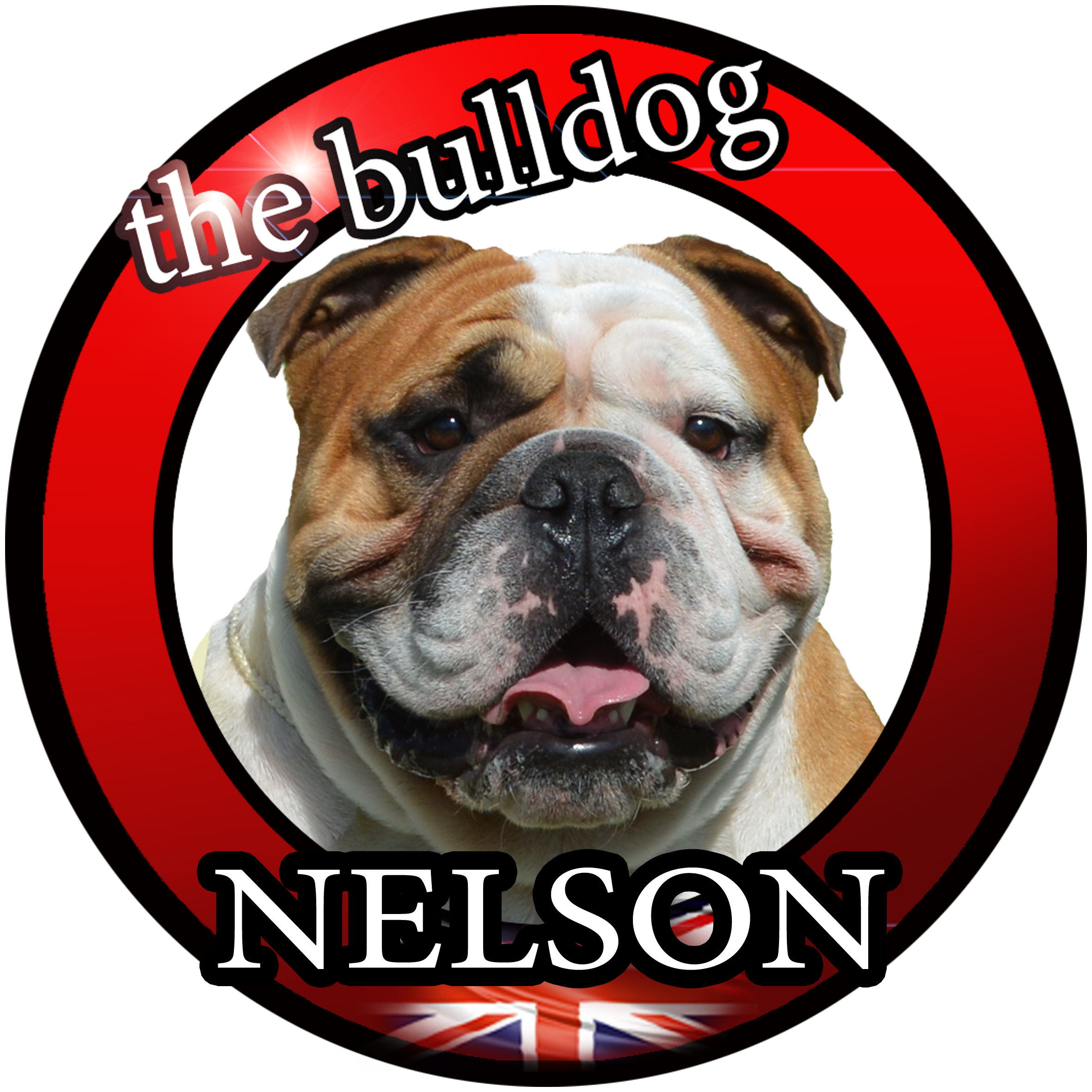 Nelson the bulldog
